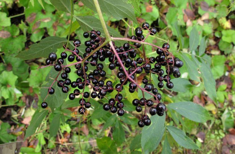 fructe-soc